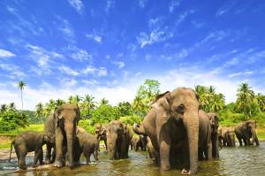 22.-sri-lanka-adventure-for-women
